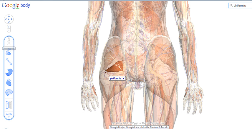 Medical Lessons Google Body Browser