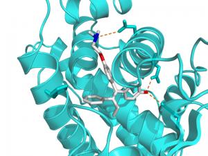 tamoxifen binding an ER receptor (Wikimedia Commons)